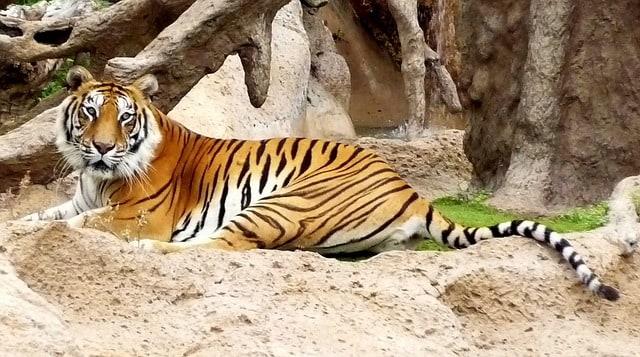 De dierentuin Loro Parque