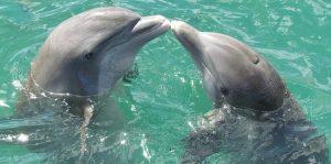 Dolfijnentoch Gran Canaria