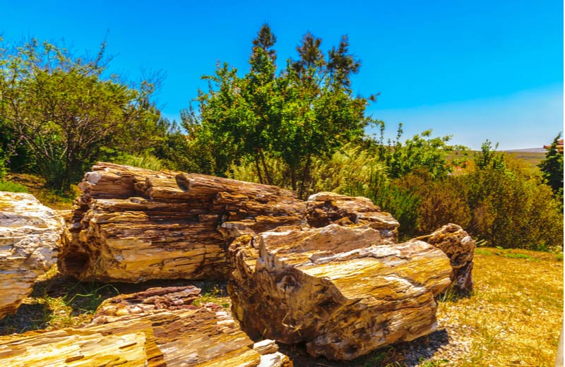 Petrified Forest op Lesbos