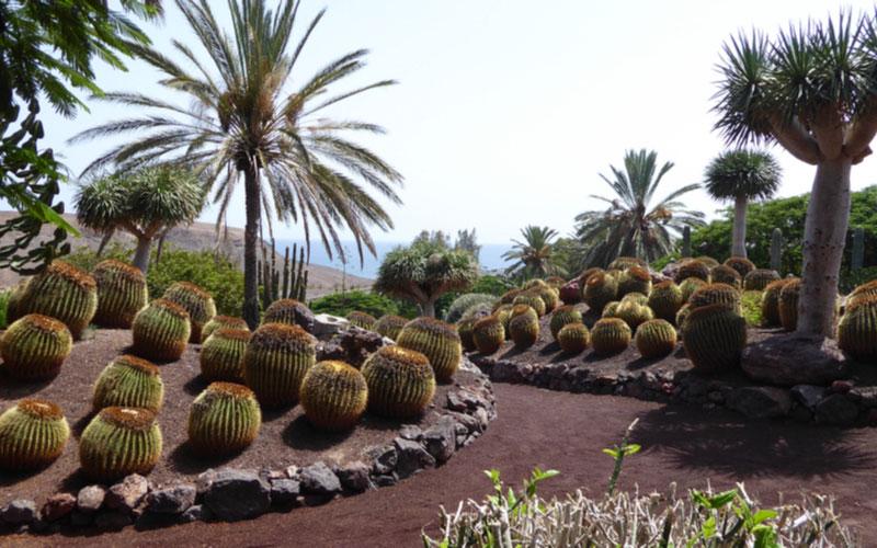 Botanische tuinen in Oasis Park