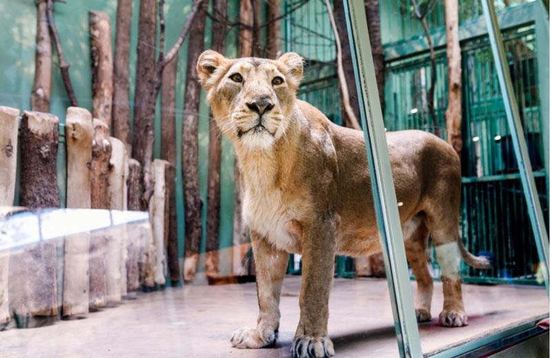 Dierentuin Parc Zoologique