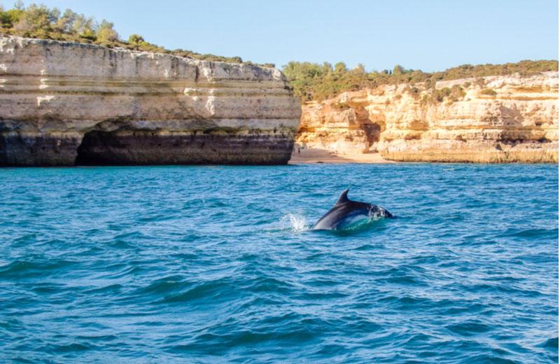 Dolfijnen spotten in Albufeira