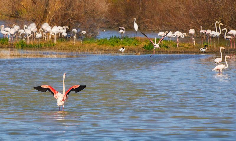 Flamingos in Parc Natural del Aiguamolls de l'Empordà