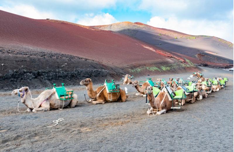 Kamelentocht door Montanas del Fuego