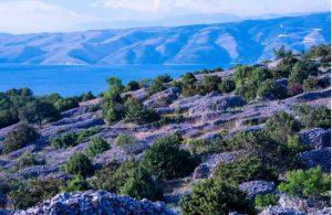 Lavendel velden op Hvar