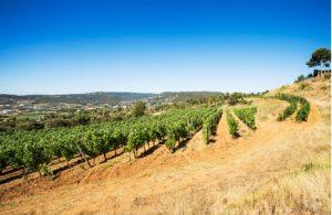 Wijnvelden in Emporda