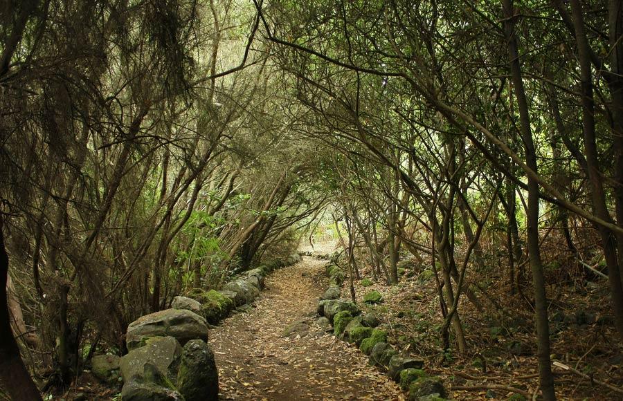 Bijzonder wandelpad en natuur op La Palma