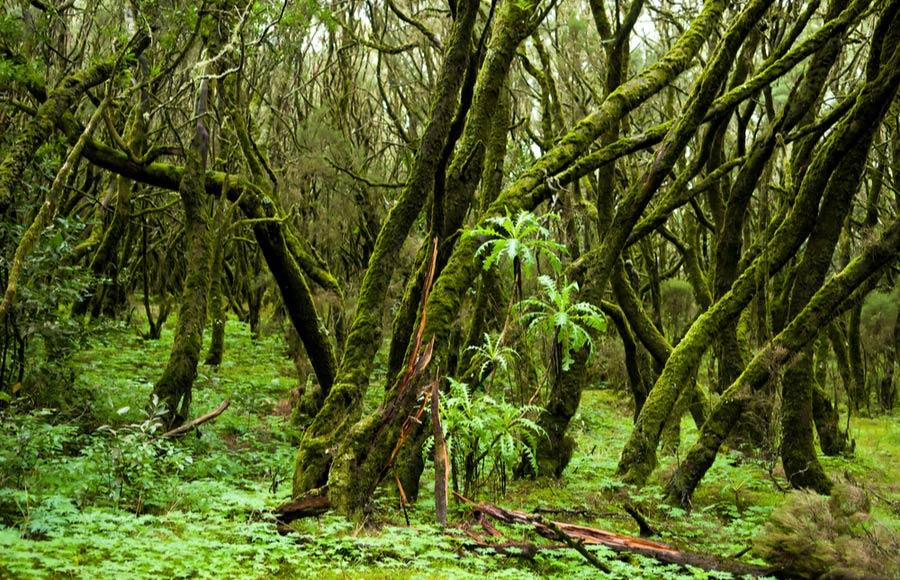 Het regenwoud Parque National de Garajonay