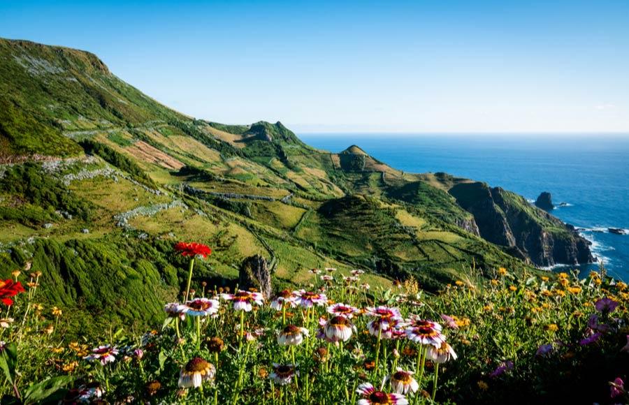 Prachtige bloemen met groene natuur op Flores de Azoren
