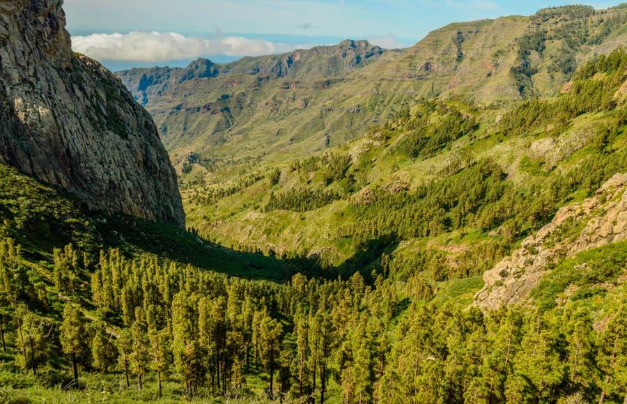 Ravijn in Parque natural de Majona op La Gomera