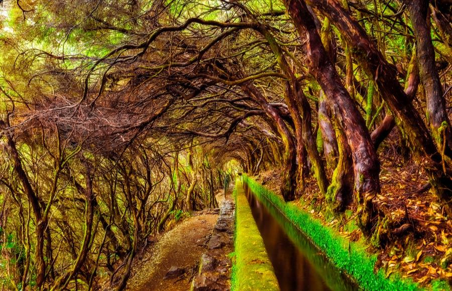 Wandelen door het Laurisilva bos